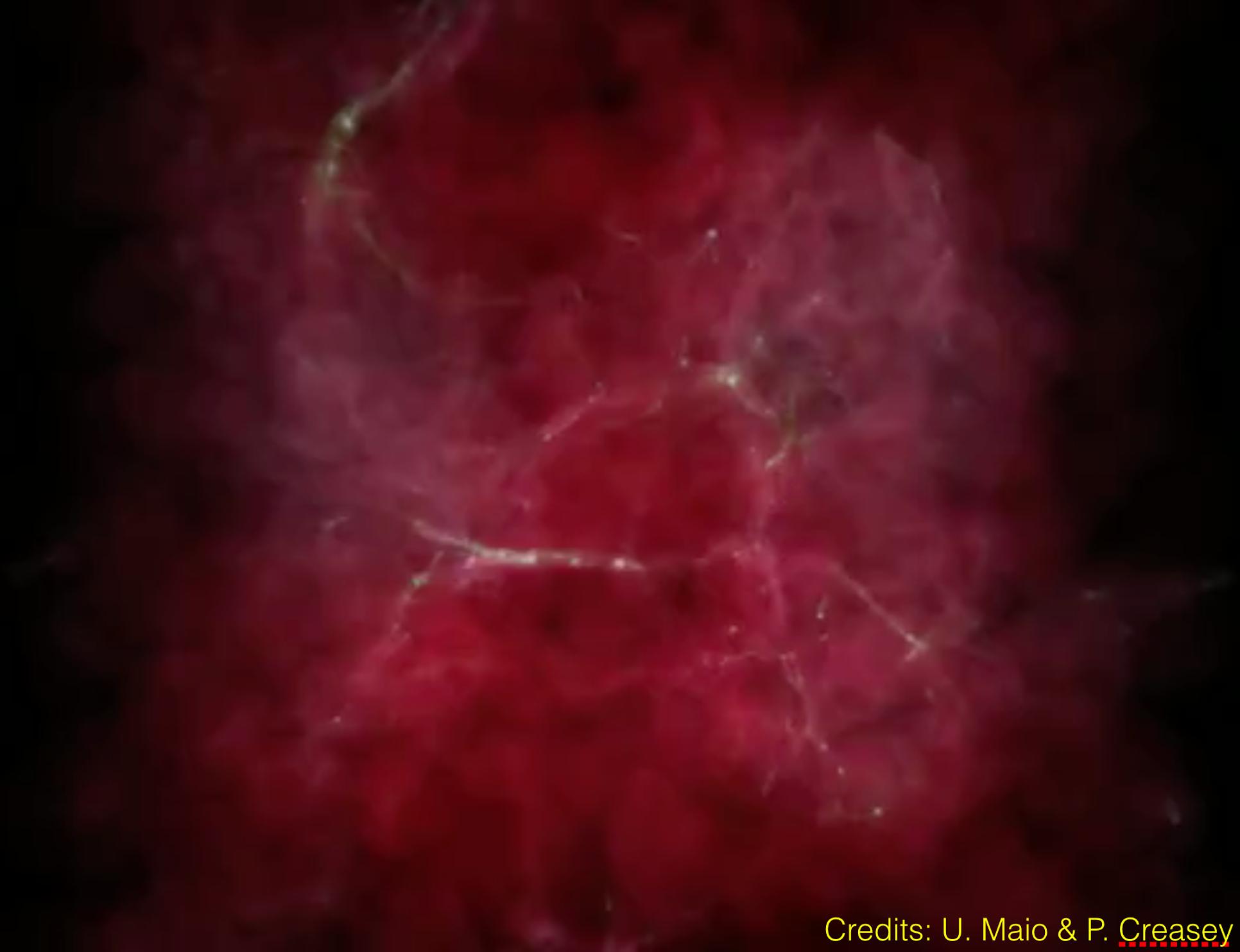 Gas kollabiert in Filament-Strukturen im frühen Universum. Die hellen Knotenpunkte stellen die Keimzellen der Entstehung der ersten Galaxien dar (Maio & Creasey).